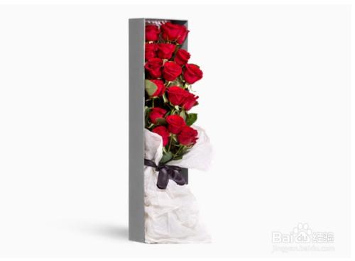 红玫瑰花语图片