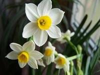 适合阳台养的开花植物图片