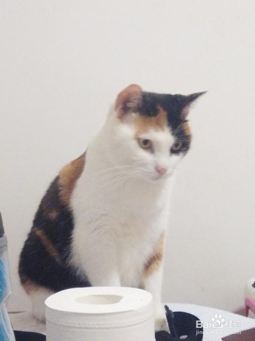 适合和猫一起养的宠物图片