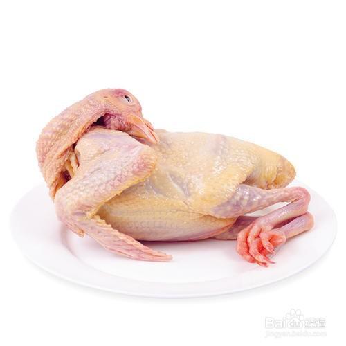 鸽子哪五种人是不能吃的?吃鸽子有什么...