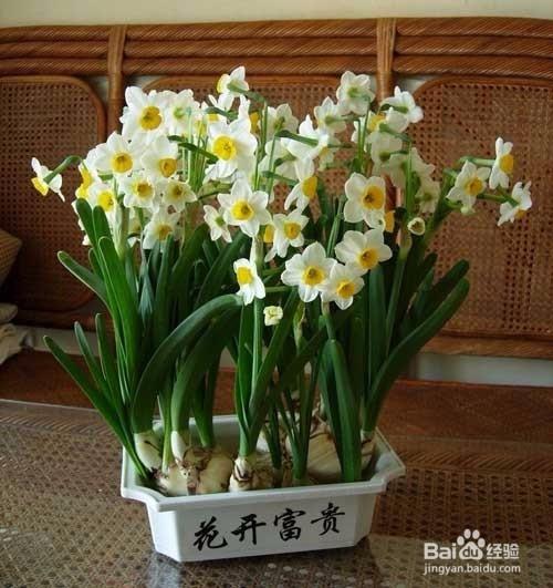 适合家里养的开花植物图片