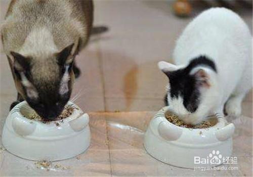 猫挑食不吃猫粮只吃肉图片