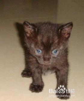 猫咪最近总拉稀怎么回事图片
