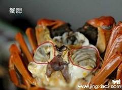 蟹黄是什么部位图片
