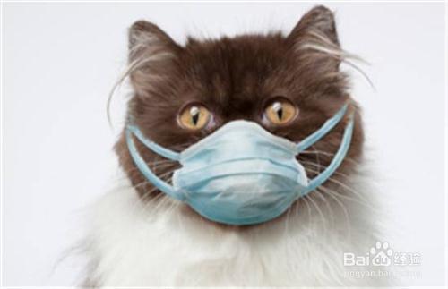 猫咪打喷嚏流鼻涕图片