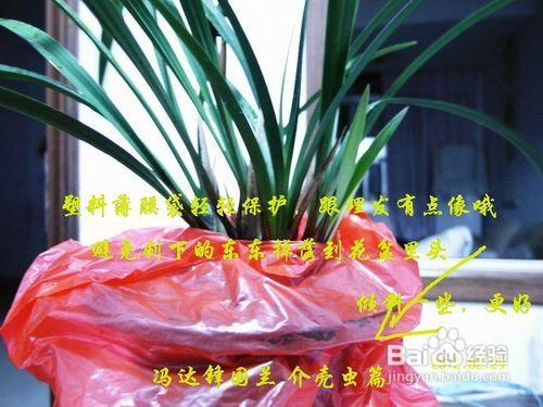 兰花常见病害及防治方法图片