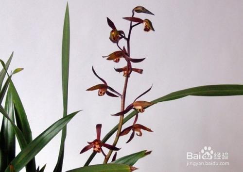 天津适合养什么比较香的花图片
