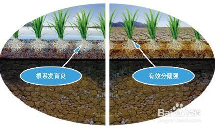 水稻穴直播机的工作原理及特点