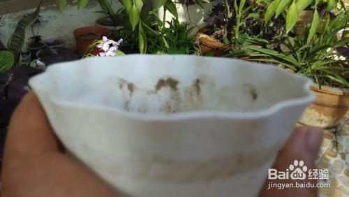 观音莲的养殖方法图片