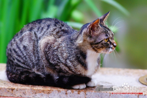 小猫多大能抓老鼠图片