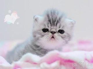 波斯猫价格多少钱一只图片