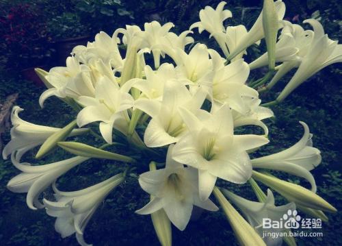 适合室内养的10种开花植物图片