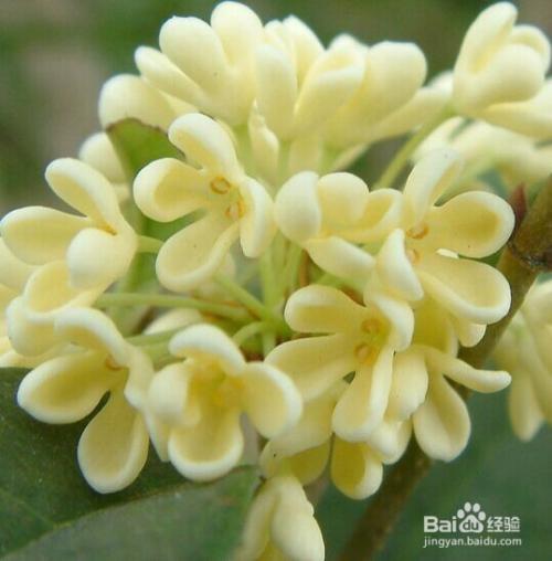 各种花的花语图片图片
